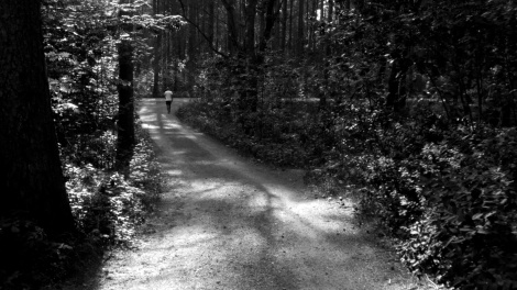 Skogsveiidyll